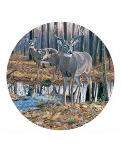 Carson Home Accents Deer Car Coaster