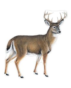 Sabertooth Wildlife Decal - Small - Whitetail Deer - Right