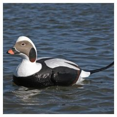 Avery Commercial-Grade Long-Tailed Foam-Filled Duck Decoys